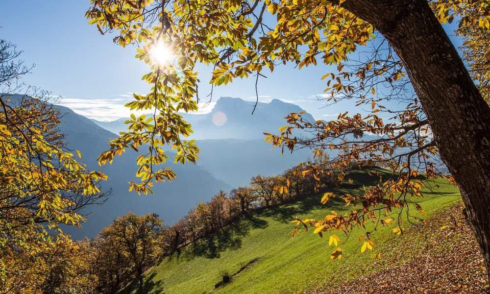 Der Lebensnerv von Südtirol
